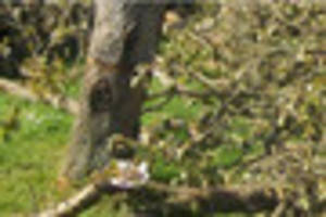 Two teenagers sought after trees in new community orchard are...
