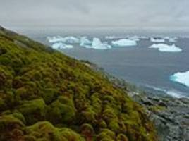 climate change is turning antarctica green
