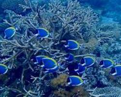 Climate change refuge for corals discovered
