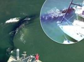 Humpback whale escapes California harbor after 24 hours
