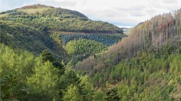 'serious concern' in industry over nrw timber deal