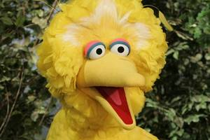 trump budget director uses big bird to justify axing public tv funding (video)