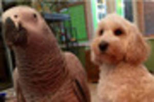 'Help! Our parrot escaped and we're devastated!' Owners plea for...