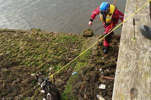 Ayrshire coastguard rescue adorable puppy from drowning after getting stuck in harbour
