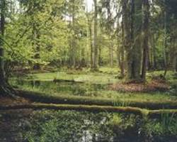 activists protest logging in poland's ancient forest
