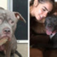 happy ending for electra, the dog who realised she was being abandoned