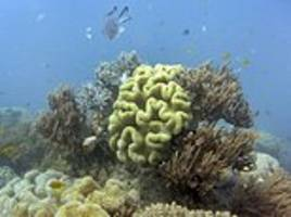 great barrier reef can no longer be saved
