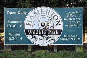 Live: Hamerton Zoo in Cambridgeshire evacuated after 'serious incident'