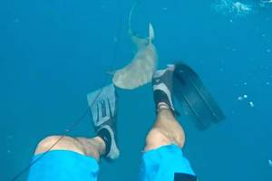 shark attacks spearfisherman, who captures it on video