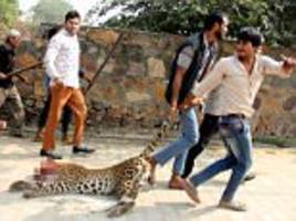 moment leopard was killed by an angry mob in india