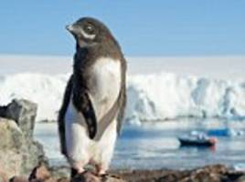 penguin poop stains on antarctic can be seen by satellites