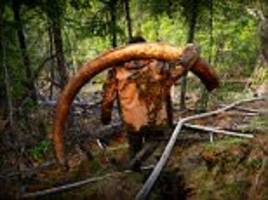 russian pirates pictured hunting for mammoth tusks