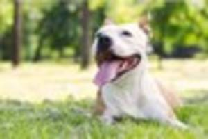Warning to Derbyshire dog owners as figures show five dogs are...