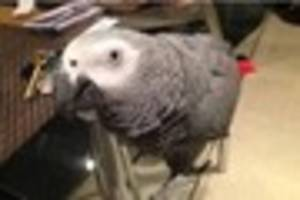 Reward of £1,000 offered to find missing parrot