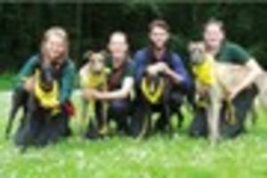 Devon dog home has influx of Greyhounds looking for new owners