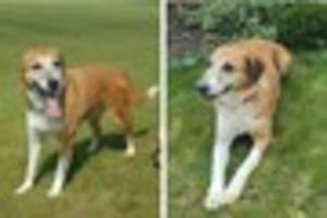Missing Exeter dog is taken away from  owner at vets