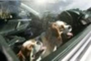 Police called to more than 40 reports of dogs left in hot cars...