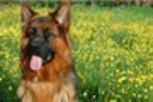 chelmsford dog owner prosecuted for failing to register her pet's...