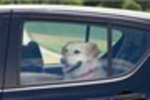 A man from Canterbury has been arrested after a dog was left in a...