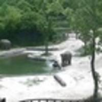 Incredible elephant rescue warms hearts