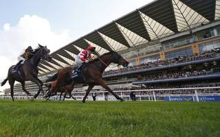 royal ascot 2017: sheikh ready to lead home a  new order in ascot gold cup