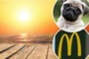 exmouth mcdonald's workers help save the life of dog suffering...