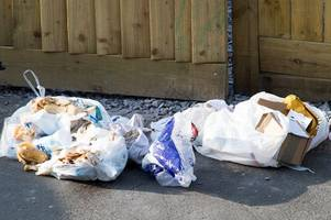 Council hits back after ripped rubbish bags left on street