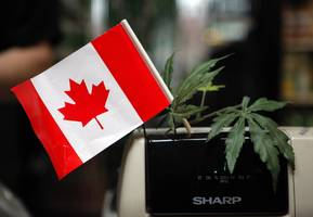 There's a potentially crippling shortage of marijuana in Canada
