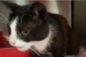 Lost cat reunited with family after year-and-a-half - then goes...