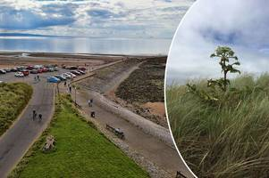 public warned to stay away from toxic weed growing on irvine beach