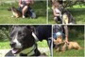 Video:  Rehome a dog from City Dogs' Home in Bucknall