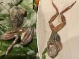 woman writes review about finding dead frog in her salad