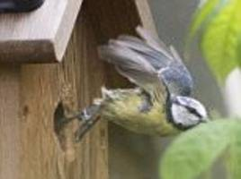 birds and bees battling for control of nesting boxes