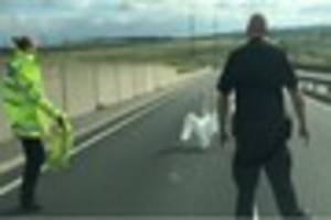 people are comparing this sheppey crossing video of police...