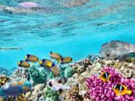 great barrier reef valued at $42 billion