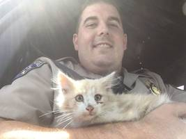 chp rescues kitten from golden gate bridge