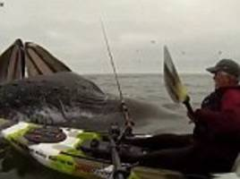 Kayaker meets two humpback whales in California