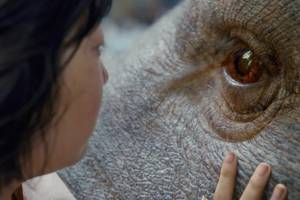 'okja' review: bong joon ho's giant pig movie for netflix is messy good fun