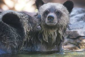 all hail the return of bearcam