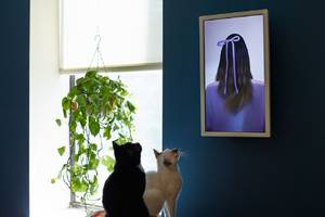 Electric Objects shutters digital art display business and sells app to Giphy