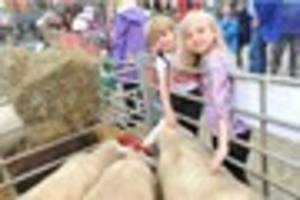 ashbourne's second annual sheep fair is just around the corner