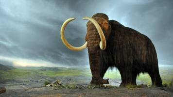 paypal founder invests $100,000 to bring back the woolly mammoth