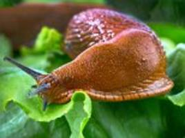 why we should welcome slugs to our garden