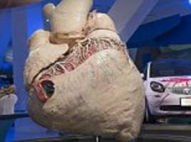 440 pound blue whale heart is first to be preserved
