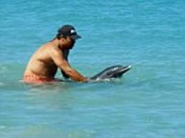heroic family save dolphin stranded on a beach in grenada