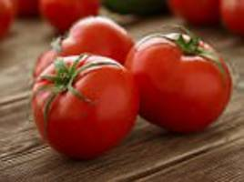 ohio state uni studies tomatoes for skin cancer cure