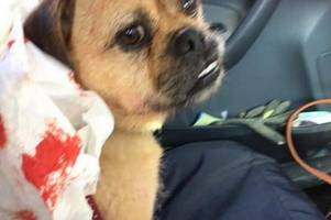 pet owner watches in horror as her dog is savaged by bulldog on riverside walk