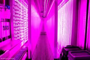 Kimbal Musk — Elon's brother — is running a shipping container farm compound in New York City