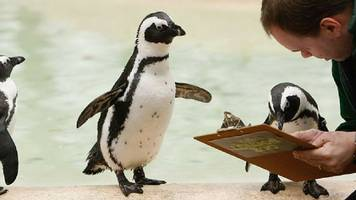 take our survey, because everyone loves surveys (even penguins)