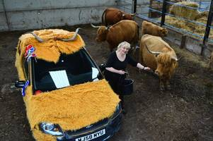 highland cow car wins best in show